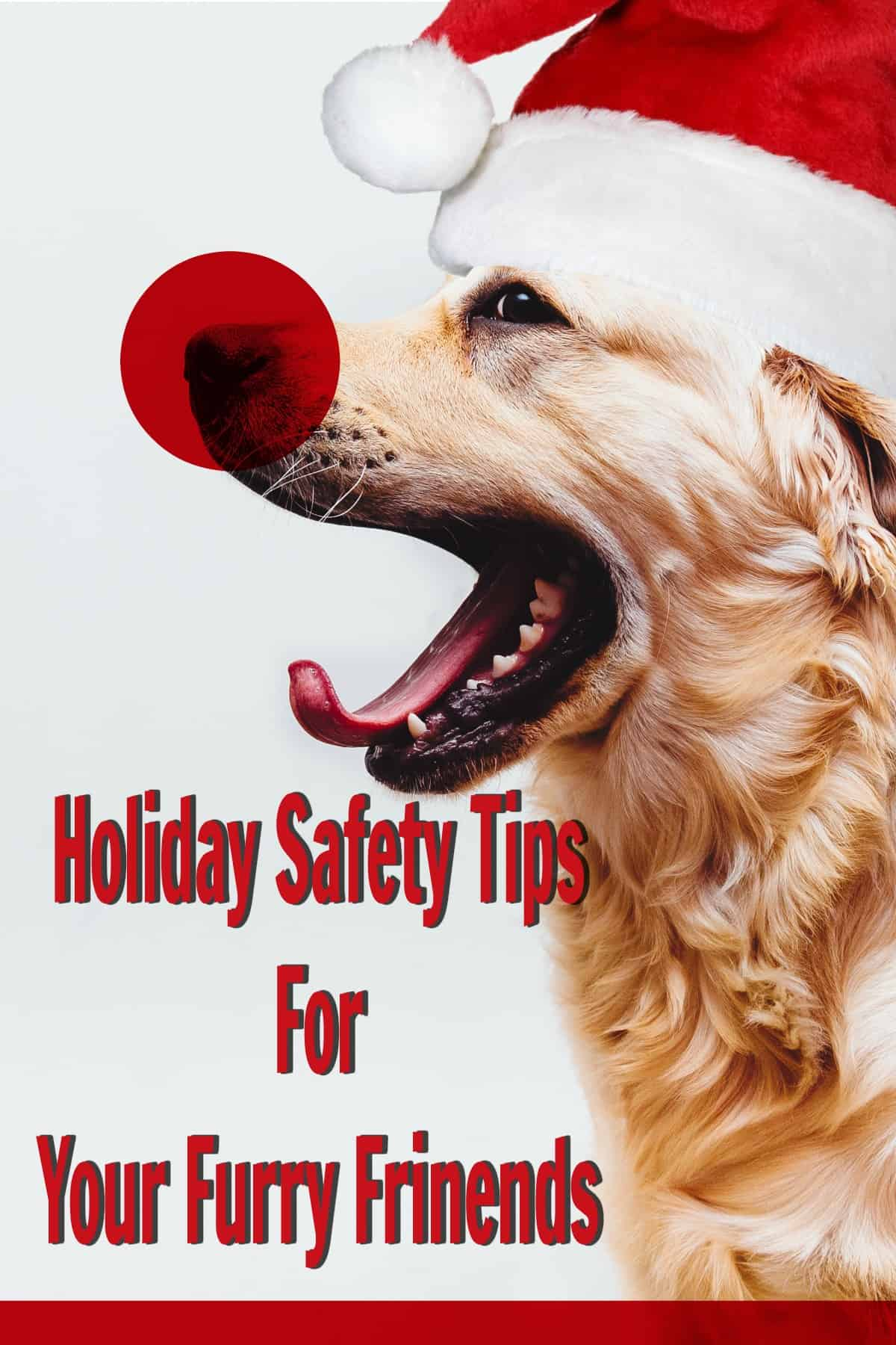 With a little planning holidays with pets can be safe and fun!