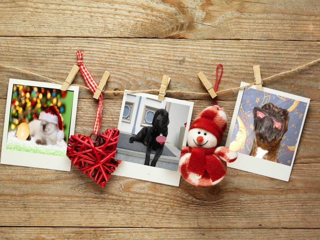 Safe holidays with pets